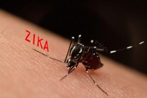 bigstock-macro-of-mosquito-sucking-bloo-119076395-300x200